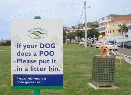 dog-poo-signage